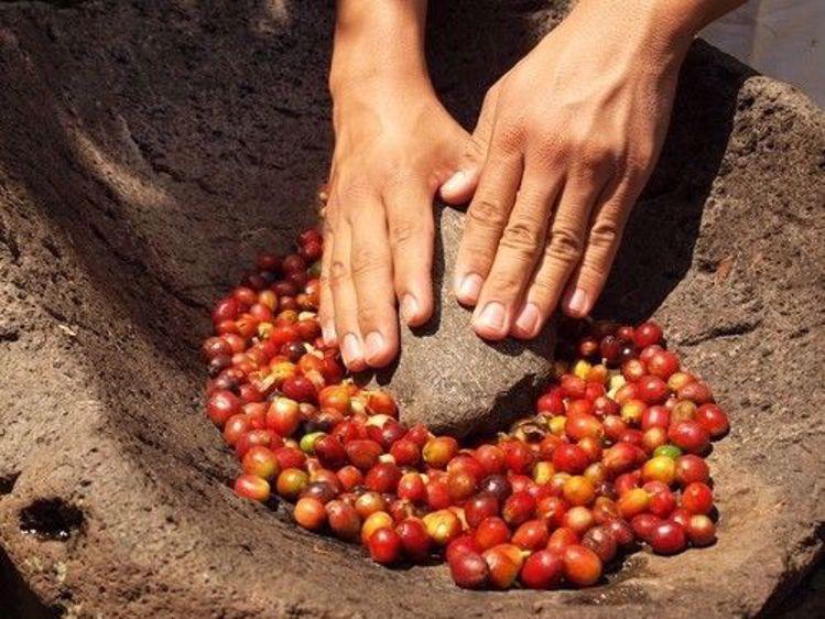 Afbeeldingen van Costa Rica Tournon SHB